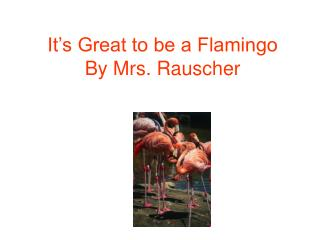 It's Great to be a Flamingo By Mrs. Rauscher