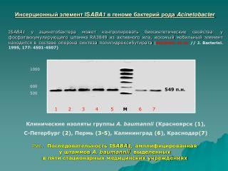 Инсерционный элемент  IS ABA1 в геноме бактерий рода  Acinetobacter
