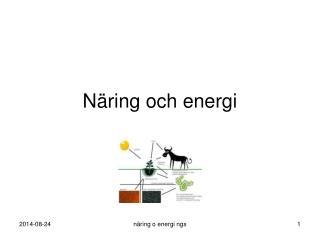 Näring och energi