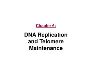 Chapter 6: DNA Replication      and Telomere Maintenance
