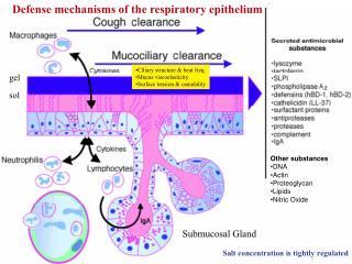 Submucosal Gland