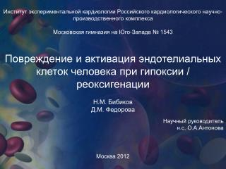 Повреждение и активация эндотелиальных клеток человека при гипоксии / реоксигенации