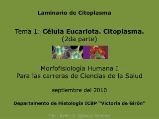 Laminario de Citoplasma