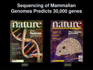 Sequencing of Mammalian Genomes Predicts 30,000 genes