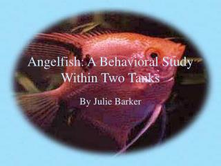Angelfish: A Behavioral Study Within Two Tanks