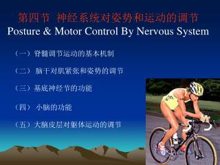 第四节  神经系统对姿势和运动的调节 Posture & Motor Control By Nervous System