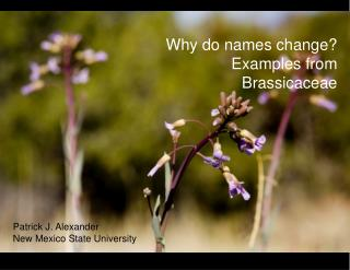 Why do names change? Examples from Brassicaceae