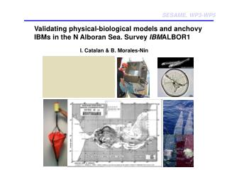 Validating physical-biological models and anchovy IBMs in the N Alboran Sea. Survey  IBM ALBOR1