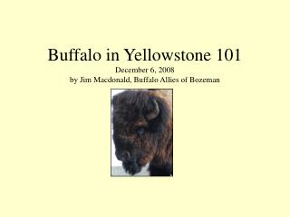 Buffalo in Yellowstone 101 December 6, 2008 by Jim Macdonald, Buffalo Allies of Bozeman