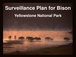 Surveillance Plan for Bison Yellowstone National Park