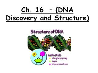 Ch. 16  � (DNA Discovery and Structure)