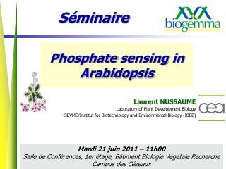 Phosphate  sensing  in Arabidopsis