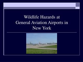 Wildlife Hazards at  General Aviation Airports in  New York