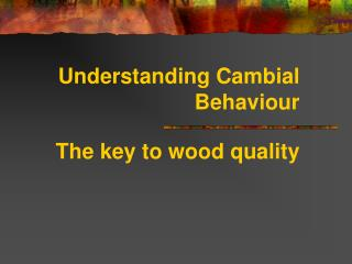 Understanding Cambial Behaviour  The key to wood quality