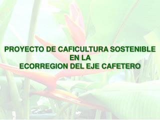 PROYECTO DE CAFICULTURA SOSTENIBLE  EN LA  ECORREGION DEL EJE CAFETERO