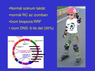 Normál szérum laktát normál RC az izomban Izom biopszia:RRF  izom DNS: 6 kb del (30%)