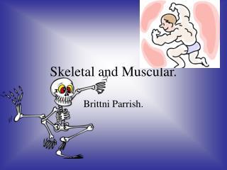 Skeletal and Muscular.