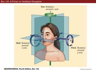 Box 14A  A Primer on Vestibular Navigation