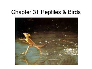 Chapter 31 Reptiles & Birds