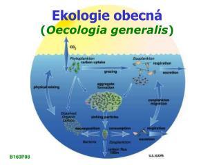 Ekologie obecn� ( Oecologia generalis )