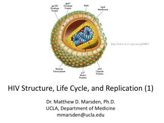 HIV Structure, Life Cycle, and Replication (1) Dr. Matthew D. Marsden, Ph.D.