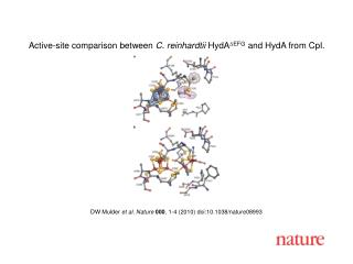 DW Mulder  et al .  Nature 000 ,  1 - 4  (2010) doi:10.1038/nature08 993