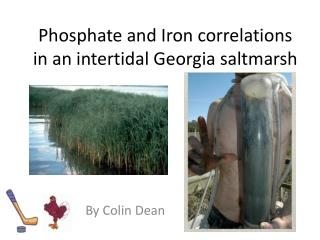 Phosphate and Iron correlations in an intertidal Georgia saltmarsh