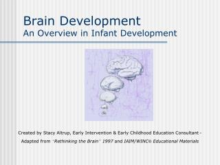 Brain Development An Overview in Infant Development
