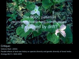 The SGDC pattern in  recovering forest herb communities: Explained by drift?