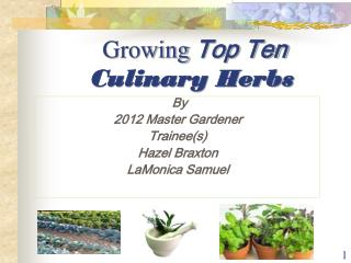 Growing  Top Ten Culinary Herbs