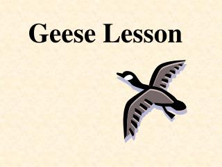 Geese Lesson