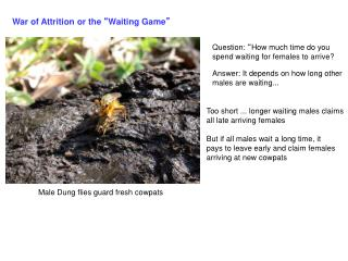 """War of Attrition or the  """" Waiting Game """""""
