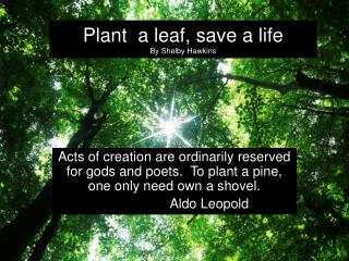 Plant  a leaf, save a life By Shelby Hawkins