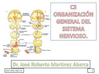 C3 ORGANIZACIÓN  GENERAL DEL SISTEMA NERVIOSO.