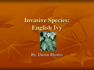 Invasive Species: English Ivy