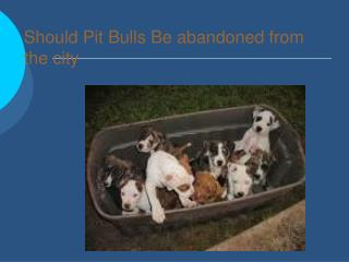 Should Pit Bulls Be abandoned from the city