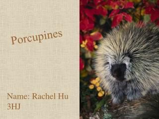 Name: Rachel Hu   3HJ