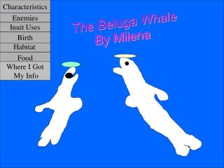 The Beluga Whale By Milena