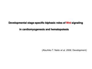 Developmental stage-specific biphasic roles of  Wnt  signaling