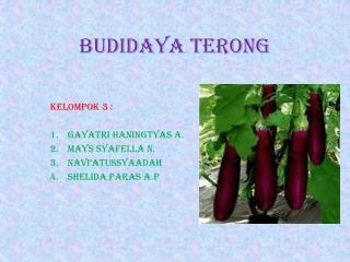 BUDIDAYA TERONG