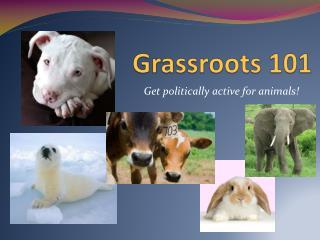 Grassroots 101