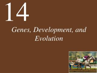 Genes, Development, and Evolution