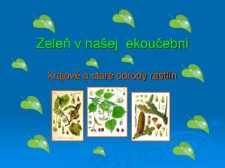 Zeleň v našej  ekoučebni