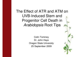 The Effect of ATR and ATM on UVB-Induced Stem and Progenitor Cell Death in  Arabidopsis  Root Tips