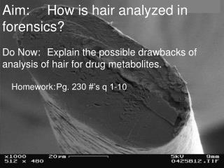 Aim:	How is hair analyzed in forensics?