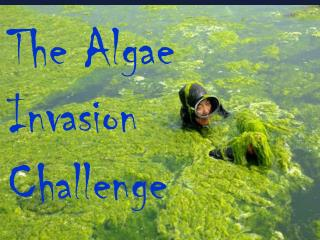 The  Algae  Invasion  Challenge