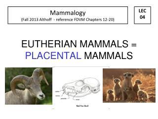 EUTHERIAN MAMMALS =  PLACENTAL  MAMMALS