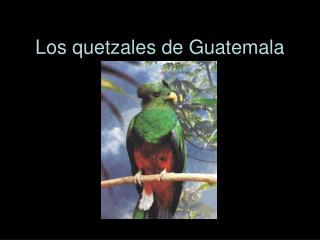 Los quetzales de Guatemala