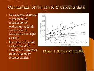 Comparison of Human to  Drosophila  data