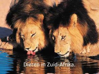 Dieren in Zuid-Afrika.